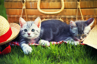 Kitty Picnic Picture for Android, iPhone and iPad