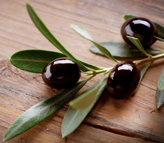 Olive Branch - Obrázkek zdarma pro iPad