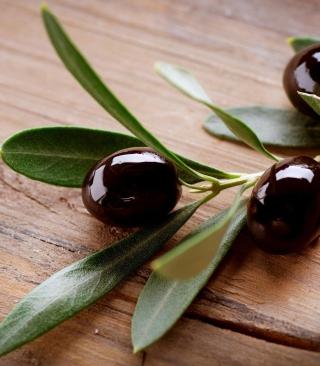 Olive Branch - Obrázkek zdarma pro 768x1280