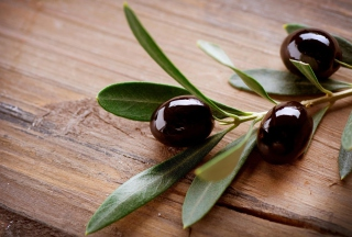 Olive Branch - Obrázkek zdarma pro Motorola DROID