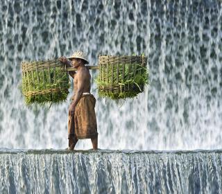 Vietnamese Farmer - Obrázkek zdarma pro 128x128