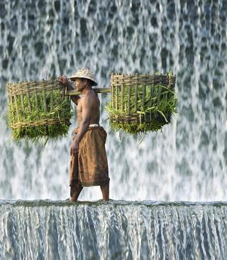 Vietnamese Farmer - Obrázkek zdarma pro Nokia 206 Asha