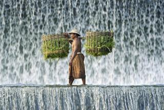 Vietnamese Farmer - Obrázkek zdarma pro 800x480