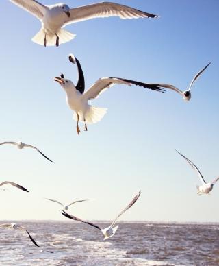 Seagulls Over Sea - Obrázkek zdarma pro 128x160