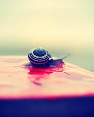 Snail On Wet Surface - Obrázkek zdarma pro Nokia Asha 309