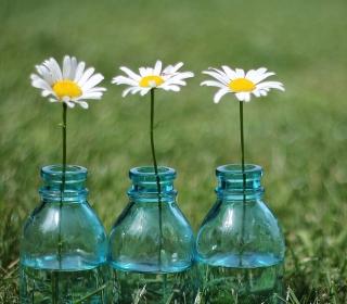 Daisies In Blue Glass Bottles - Obrázkek zdarma pro 320x320