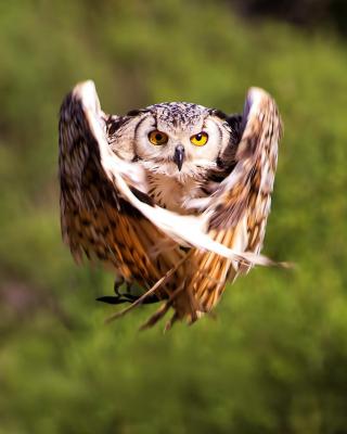 Owl Bird - Obrázkek zdarma pro Nokia Asha 303