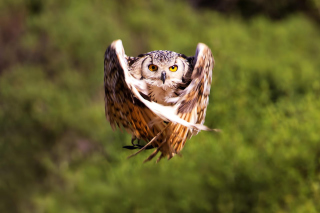 Owl Bird Wallpaper for Android, iPhone and iPad