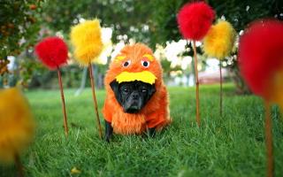 Carnival Dog - Obrázkek zdarma pro Nokia Asha 205