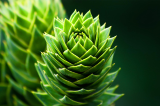 Something Green Wallpaper for Android, iPhone and iPad