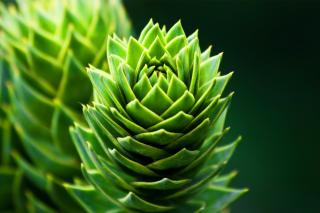Something Green - Obrázkek zdarma pro 1280x1024