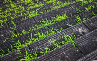 Grass Growing Fast Background for Android, iPhone and iPad