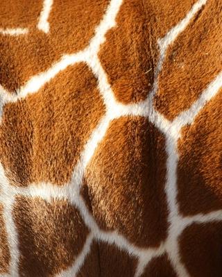 Giraffe - Obrázkek zdarma pro iPhone 5