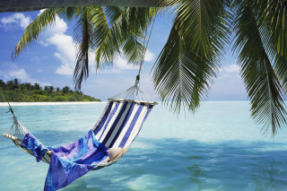 Hammock Under Palm Tree Leaves In Maldives Wallpaper for Android, iPhone and iPad