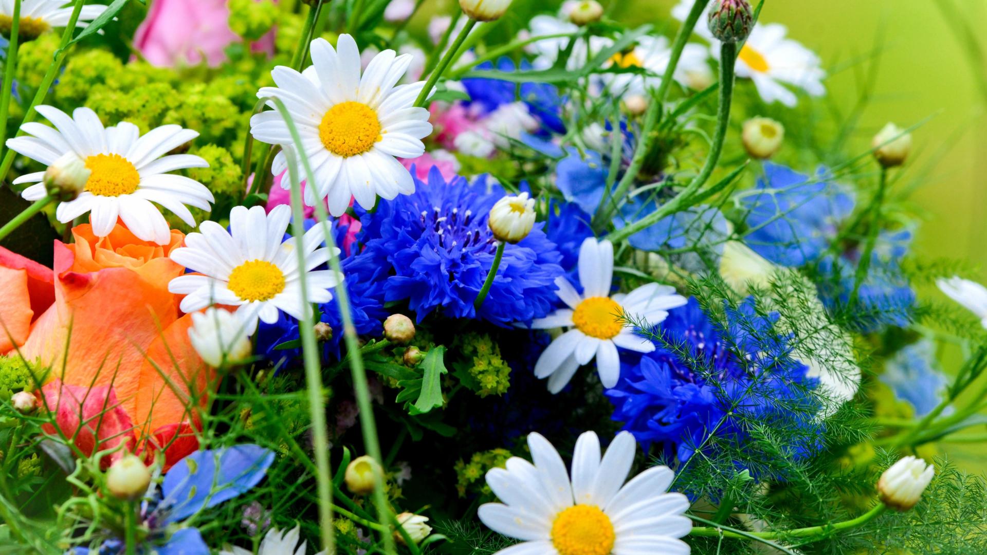 Смещение земной оси Flower-Bouquet-1920x1080