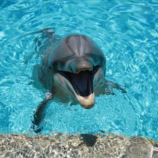 Happy Dolphin - Obrázkek zdarma pro 208x208