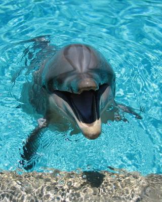 Happy Dolphin - Obrázkek zdarma pro Nokia X1-01