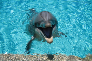 Free Happy Dolphin Picture for Android, iPhone and iPad