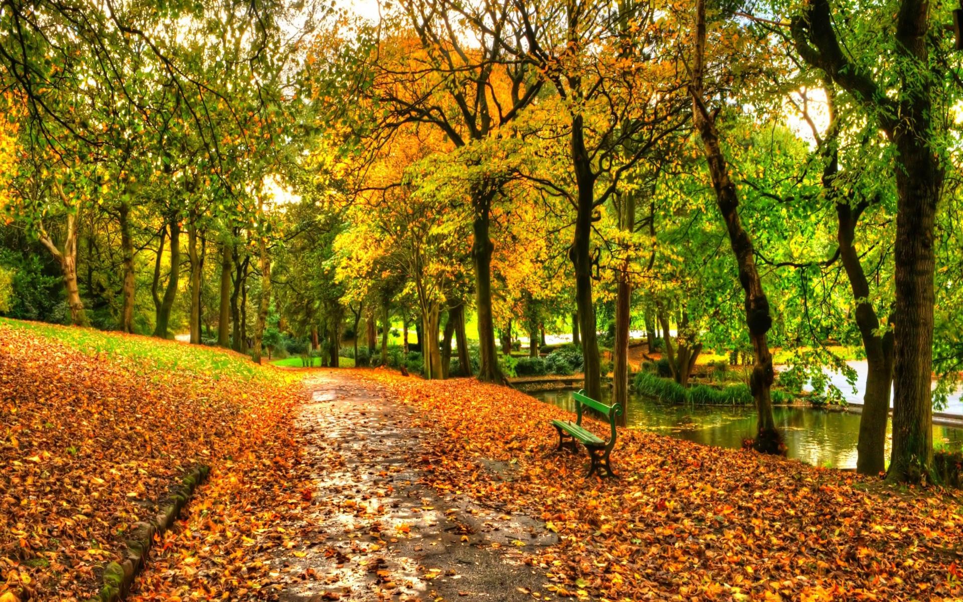 Central Park's Bow Bridge in Autumn HD Wallpaper ...  |Autumn Central Park Screensavers