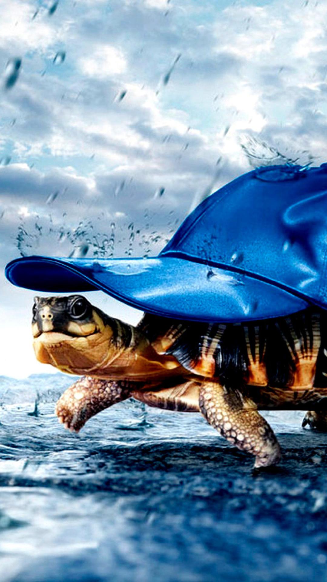 wallpaper funny turtle rain - photo #3