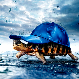 Funny Turtle - Obrázkek zdarma pro iPad mini 2