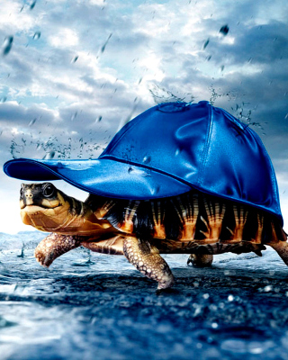 Funny Turtle Background for LG 230 Simple Flip