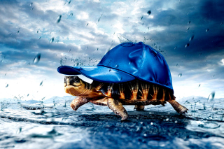 Funny Turtle Wallpaper for Android, iPhone and iPad