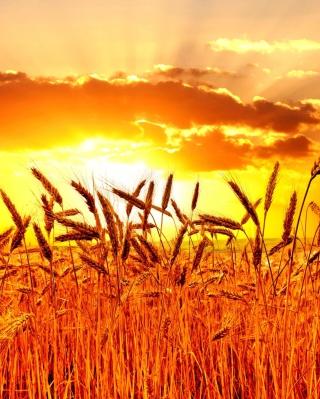 Golden Corn Field - Obrázkek zdarma pro iPhone 4S