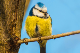 Free Yellow Bird In Zoo Picture for Android, iPhone and iPad