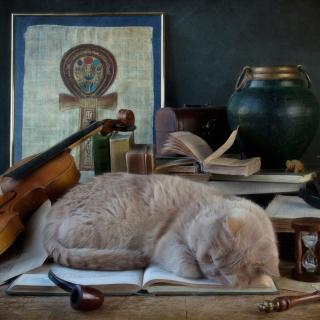 Sleeping Cat - Obrázkek zdarma pro iPad 3