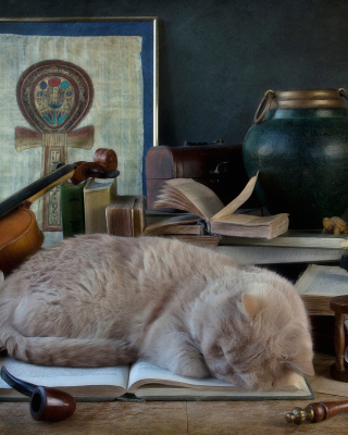 Sleeping Cat - Obrázkek zdarma pro 240x320