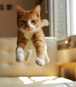 Cat Jump - Obrázkek zdarma pro Nokia C-5 5MP