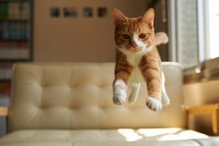 Cat Jump - Obrázkek zdarma pro 176x144