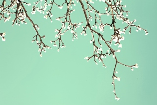 Free Beginning Of Spring Picture for Android, iPhone and iPad