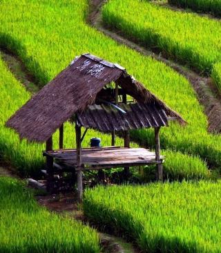 Field With House - Obrázkek zdarma pro 360x400