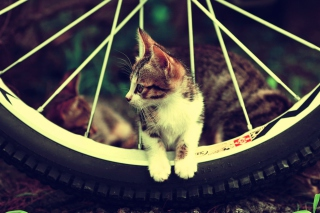 Free Cat And Tire Picture for Android, iPhone and iPad