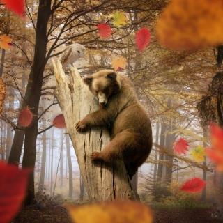 Bear In Autumn Forest - Obrázkek zdarma pro iPad