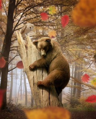 Bear In Autumn Forest - Obrázkek zdarma pro Nokia Asha 203