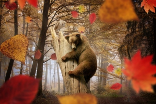 Bear In Autumn Forest - Obrázkek zdarma pro Fullscreen Desktop 1400x1050