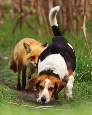 Hunting dog and Fox - Obrázkek zdarma pro Nokia Asha 308