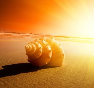 Shell On Beach - Obrázkek zdarma pro iPad mini