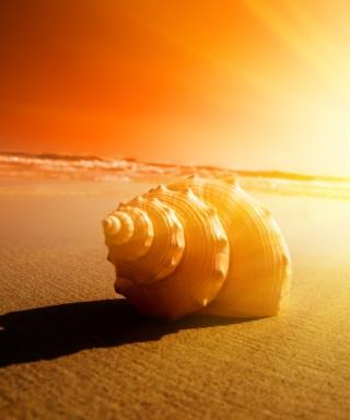 Shell On Beach - Obrázkek zdarma pro 768x1280