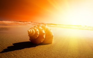 Shell On Beach Background for Android, iPhone and iPad