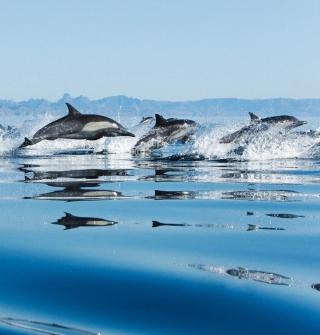 Dolphins - Obrázkek zdarma pro iPad 3