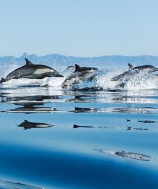 Dolphins - Obrázkek zdarma pro Nokia Asha 305