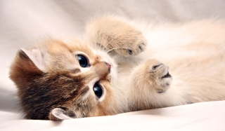 Free Kitten Cute Picture for Android, iPhone and iPad