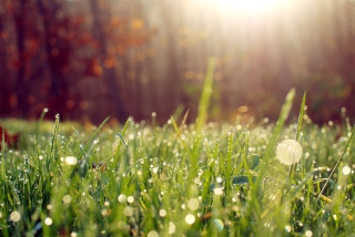 Grass And Morning Dew Wallpaper for Android, iPhone and iPad