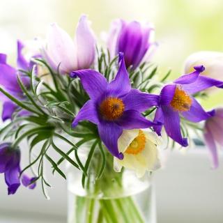 Purple Pulsatilla Flowers - Obrázkek zdarma pro iPad mini 2