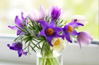 Purple Pulsatilla Flowers - Obrázkek zdarma pro HTC Wildfire