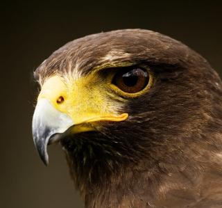 Eagle - Obrázkek zdarma pro iPad mini